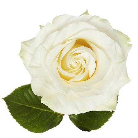 Bouquet Rose premium Mondial by piece