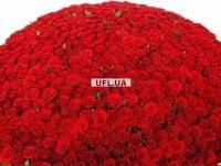 Bouquet 1000 roses - 1001 garnet roses