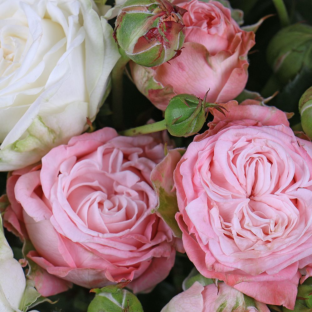 Bouquet Spray roses in a box