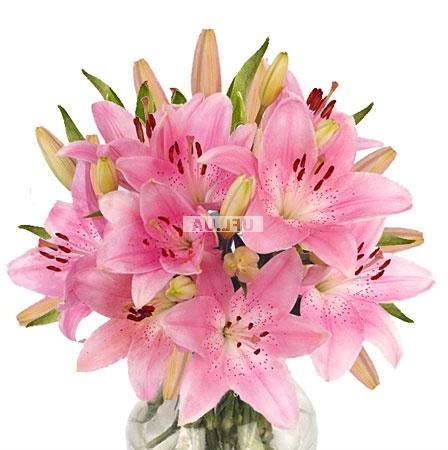 Bouquet Lightness