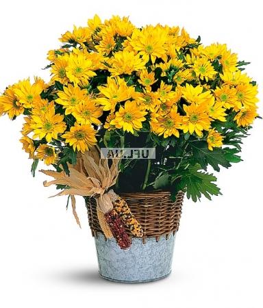 Bouquet Sunny days
