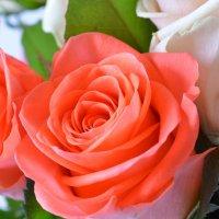 Bouquet Paris secrets