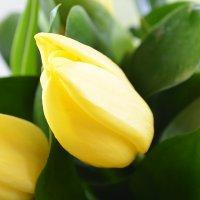 Bouquet A gust of feeling