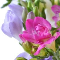 Bouquet Rainbow