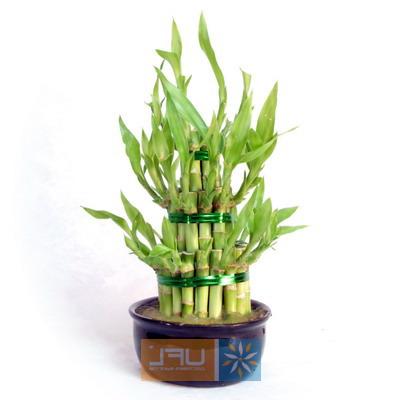 Bouquet Bamboo