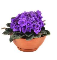http://ua-flowers.com/goods_pics/3027_s.jpg