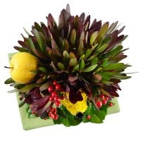 Bouquet Hedgehog in the Fog