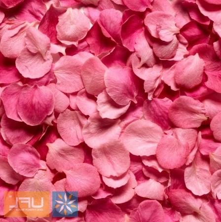 Bouquet Pink rose petals