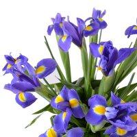 Bouquet Heaven field