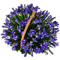 Bouquet 101 blue iris