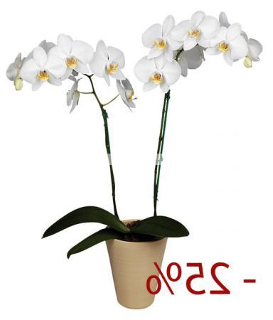 Bouquet Orchid 25% discount