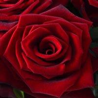 Bouquet Fiery flower