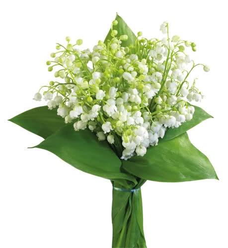 Bouquet Symphony