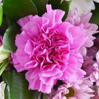 Bouquet Belvedere