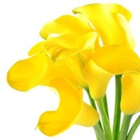 Bouquet Yellow_sea