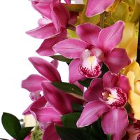 Bouquet Orchid dance