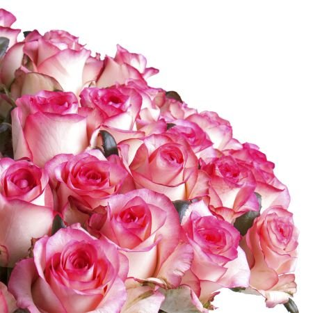 Order beautiful bouquet of 51 white and pink rose with delivery to any city