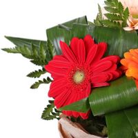 Bouquet Flower grace (wholesale)