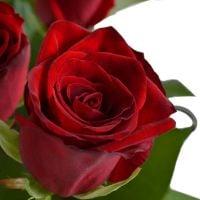Bouquet 19 roses Krivoy Rog