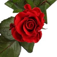 Bouquet Роза Эль Торо поштучно