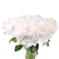 Bouquet White peonies by piece