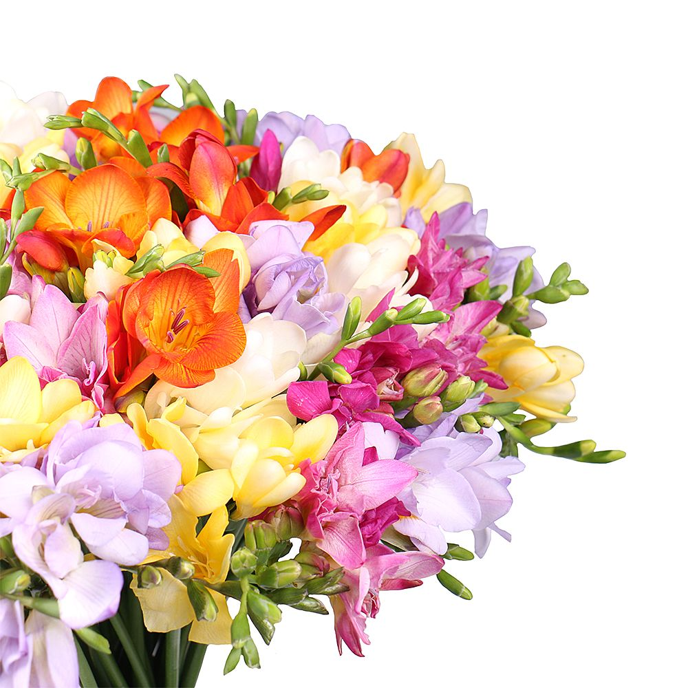 Bouquet Of the 65 multi-colored freesias
