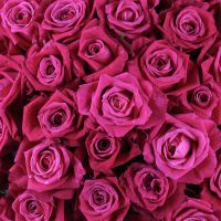 Bouquet 51 crimson roses