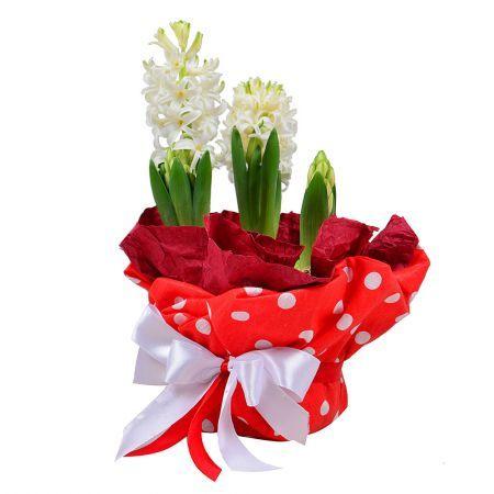 Bouquet Fragrant Hyacinth