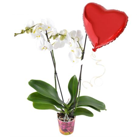 Product White orchid + heart balloon