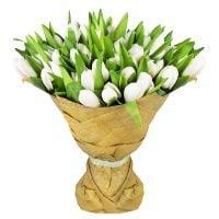 Bouquet 51 white tulips