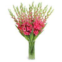 Bouquet Pink gladiolus