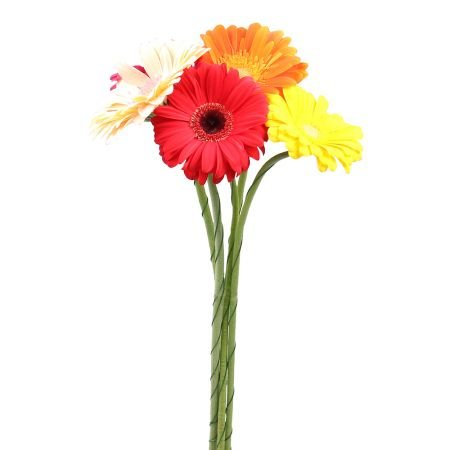 Bouquet Red gerberas by the piece