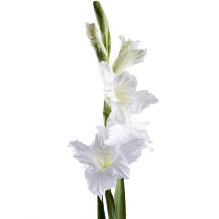 Bouquet Gladiolus white piece