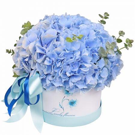 Bouquet Blue hydrangea in a box