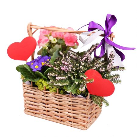 Product Potted mix in a basket