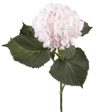 Buy white hydrangea apiece with delivery throughout the world