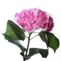 Bouquet Hydrangea pink piece