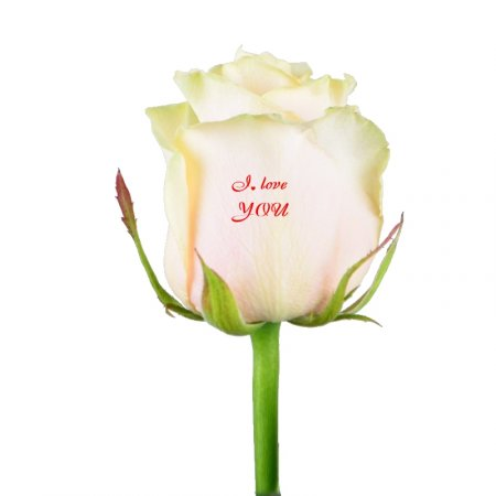 Product Talking flowers I love you