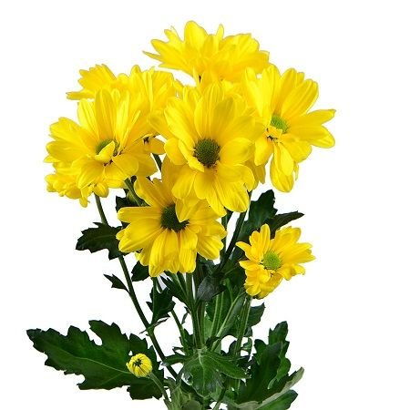 Bouquet Yellow chrysanthemums by the piece (spray)