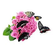 Bouquet Live butterflies