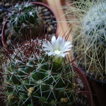 Bouquet Cacti and Succulents