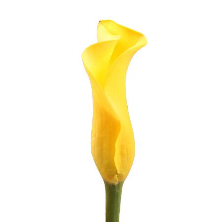 Bouquet Calla yellow by piece