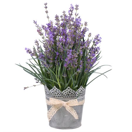 Bouquet Lavender in pot