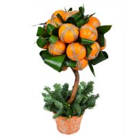 Product Tangerine tree