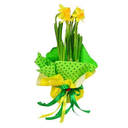 Bouquet Cute Daffodil in a Pot