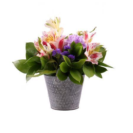 Bouquet Tenderness in spot