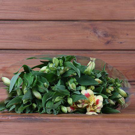 Product Whosale Alstroemeria Bali
