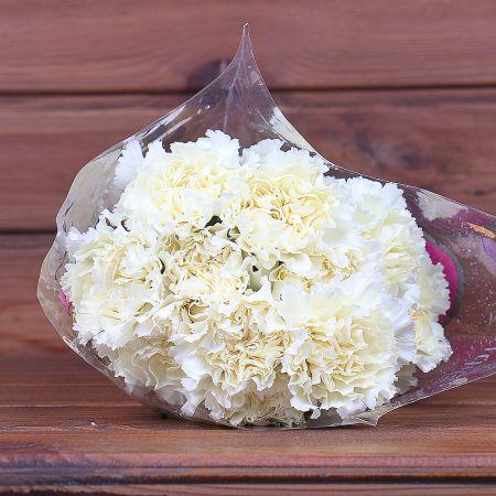 Product Whosale Carnation Diletta Crema