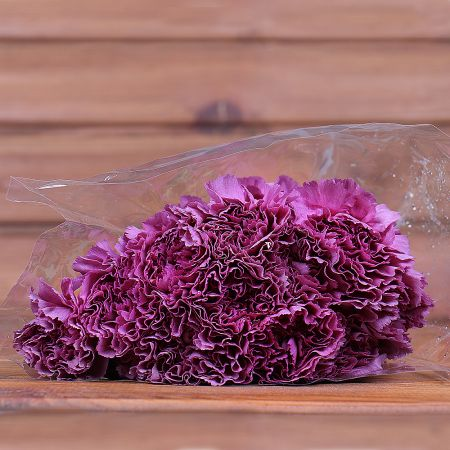 Product Whosale Carnation Extasis
