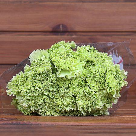 Product Whosale Carnation Goblin
